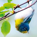 29e festival de l'oiseau et de la nature