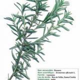 Les fiches du botaniste (1)