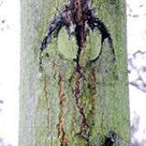Empreintes d'arbres et d'écorces