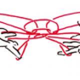 Jeux de ficelle : le fennec