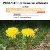 Les fiches du botaniste (7)