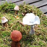 Les champignons : Des jeux… sans champignons!
