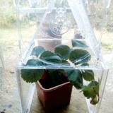 Activités au jardin : créer des mini-serres