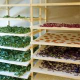 Autour du jardin : créer un séchoir à plantes